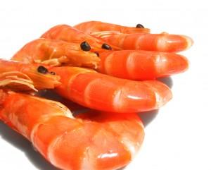 proteines crevettes