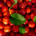 acerola superaliment vitamine C