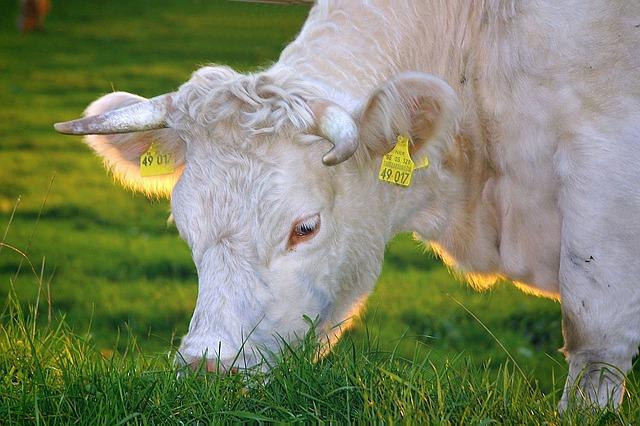 lait et produits laitiers bons pour la santé