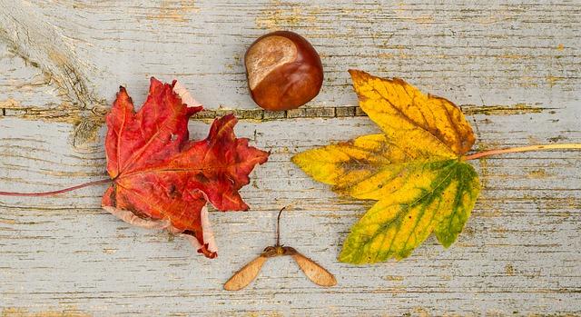 fruits et légumes de saison - novembre