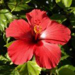 Les 5 meilleures plantes pour maigrir