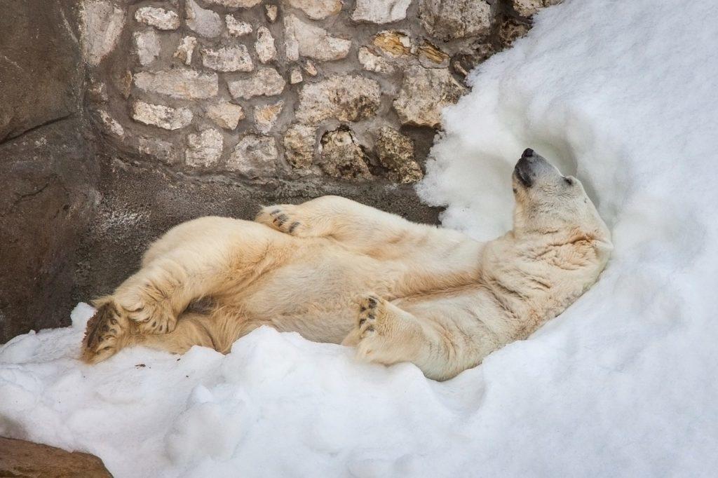 hiberner comme un ours